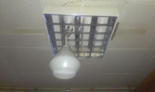 Фото прислал Михаил Олимпиев. Прямо лампа на лампе сидит и лампой погоняет!