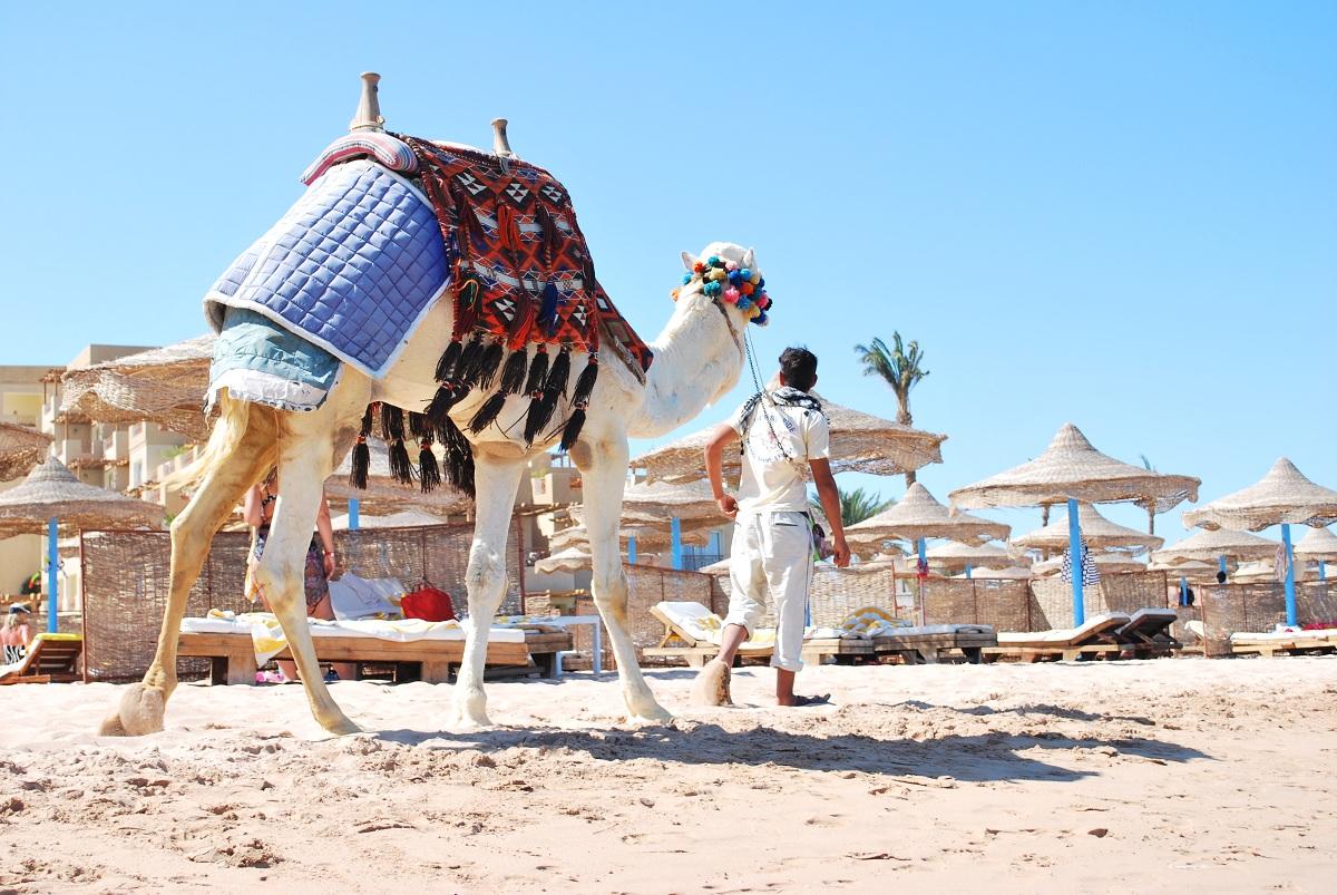 сильно отдых египет фото туристов кондитеры